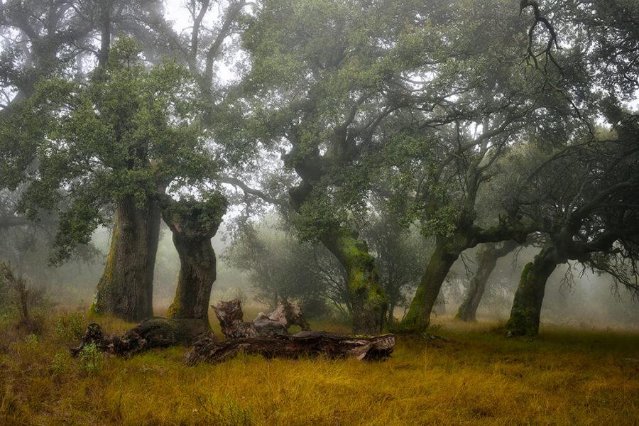 Voxcom Organiza La Exposición Del XI Concurso Fotográfico De Medio Ambiente De La Rioja